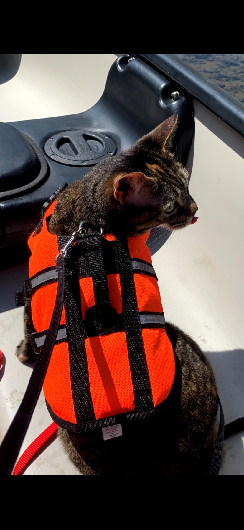 Cat with life-vest